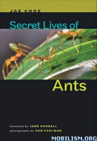 Download ebook Secret Lives of Ants by Jae Choe (.ePUB)